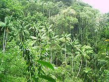 vegetation Victoria